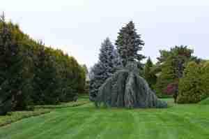 trees-199186_1280